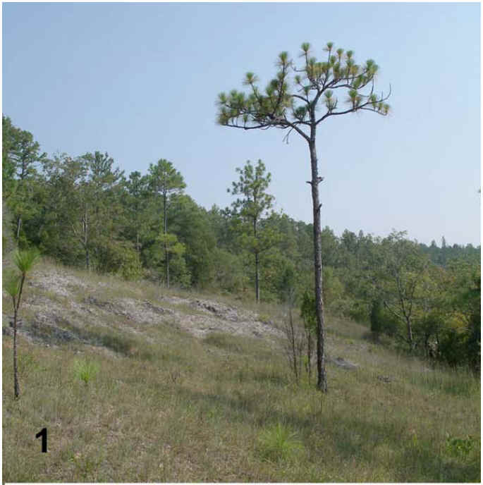Figure 1 from Hill 2007. Photo by John A. Barone.